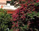 Aparthotel NAUTILUS 3* - Santa Maria (Sal), Insulele CAPULUI VERDE.